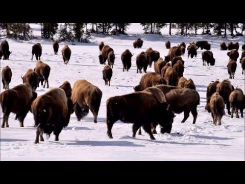 Yellowstone Snow Coach Trip February 20, 2016