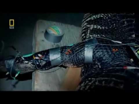 Nat Geo Predator CSI - Zombie Alligators