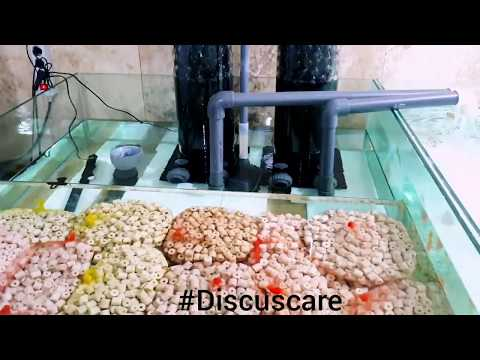 DiscusCare Filtration System On Discus Pond