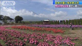 小さくてもがんばり屋 「サンパチェンス」咲き誇る(19/08/17)