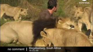 Hugs with Lions - No comment thumbnail