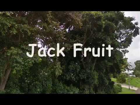 Raiding Tropical Fruit on Island of Hawaii ~ May 1987