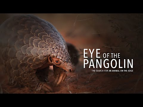 Eye of the Pangolin. Official Film [HD]. The search for an animal on the edge.