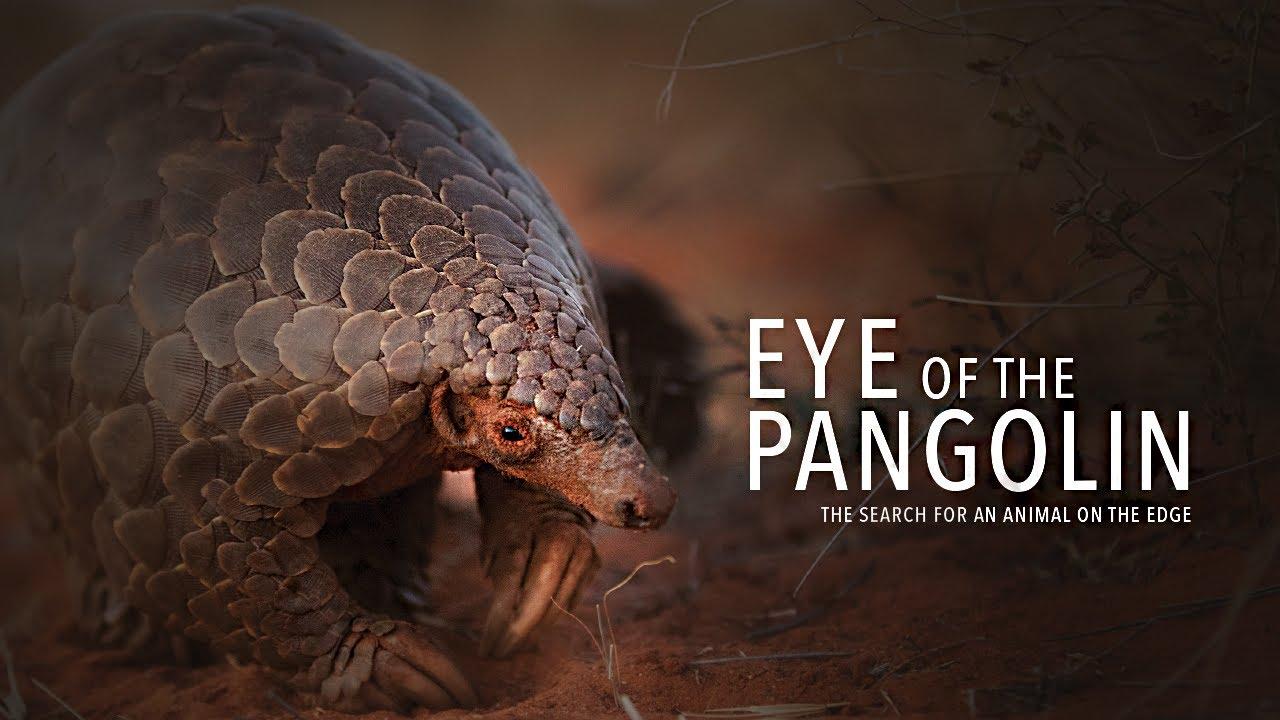 Eye of the Pangolin