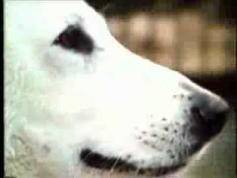 THE WHITE DOG     ENDING     REPENT AMERICA   ALL OR ETERNAL