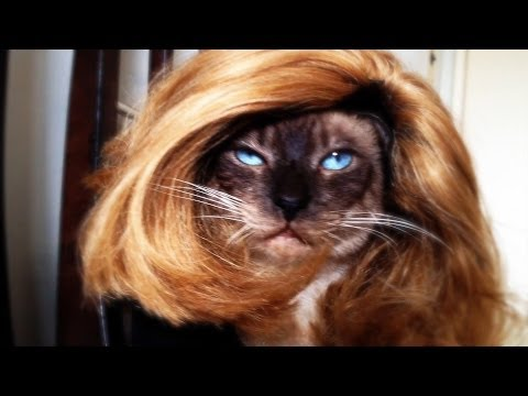 Sorry from a Drag Cat