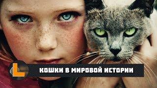 Кошки в мировой истории (2019)