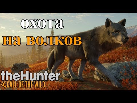 ОПАСНАЯ ОХОТА НА ВОЛКОВ!!! theHunter: Call of the Wild Yukon Valley