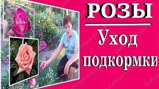 видео Каким удобрением подкормить розы весной при посадке