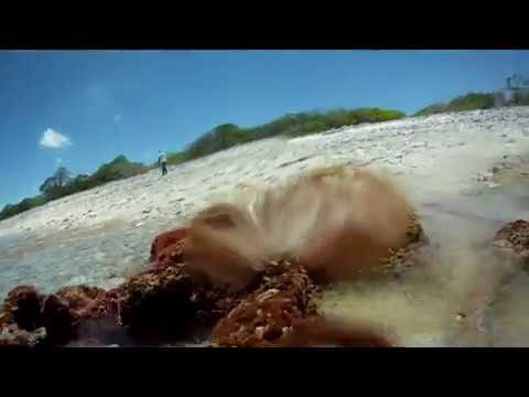 The secret life of underwater Kiritimati.