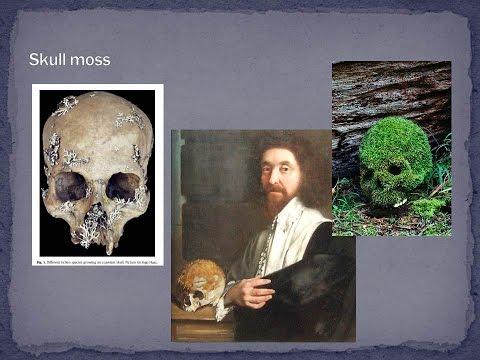 Cannibals and Saints: Bones as Medicine in...