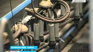На молочных фермах Новосибирской области наращиваю