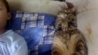 Новости!!! Кот спит на подушке!!!