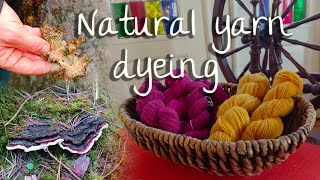 Natural yarn dyeing with mushrooms and lichen