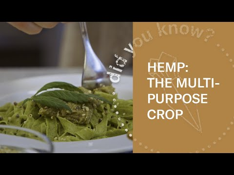 The Sustainability of Hemp | Food & Other Uses In Iceland
