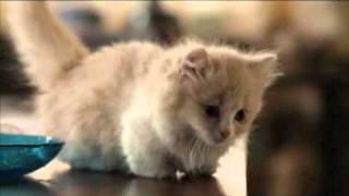 短足猫マンチカンと父を亡くした少女の触れ合いを描く心温まる物語 (つ...