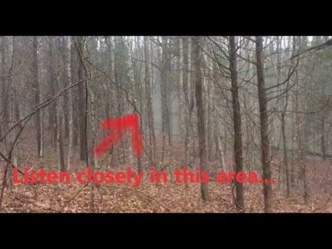 Mysterious Sounds And Movement Coming From Frightening Foggy Forest