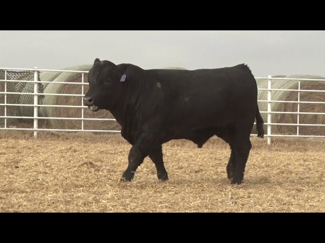 Express Ranches Lot 267