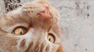 더럽고 교양없는 고양이 (가라 니는 옆에 오지 마라!!…