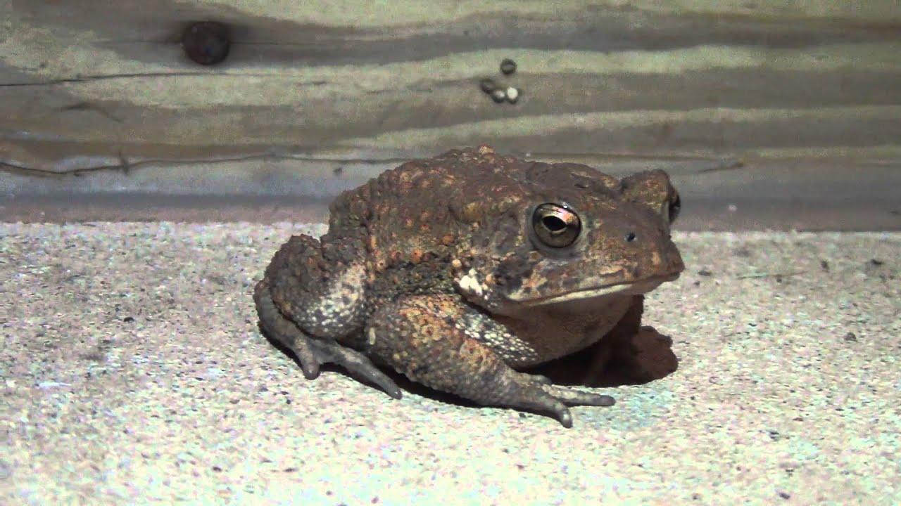 Im seeing toads everywhere youtube im seeing toads everywhere biocorpaavc Images