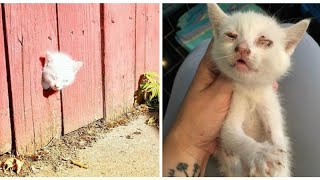 Rescuers race to save sick kittens found in fence—now they're in need of a loving home