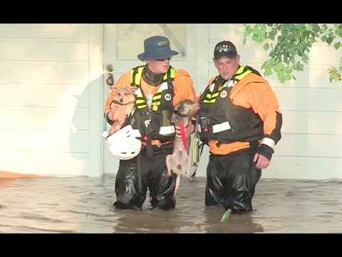 Door To Door Search And Rescue In Flooded Wharton, Texas