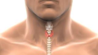 Гипертиреоз щитовидной железы(, 2014-11-10T10:45:52.000Z)