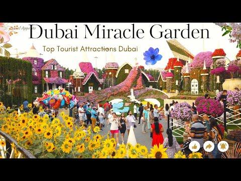 MIRACLE GARDEN DUBAI 2018 – 2019