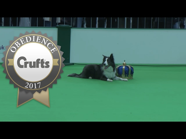 Obedience Championship - Dogs - Part 7 | Crufts 2017