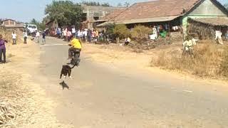 Dangerous  Dog Race!!!!