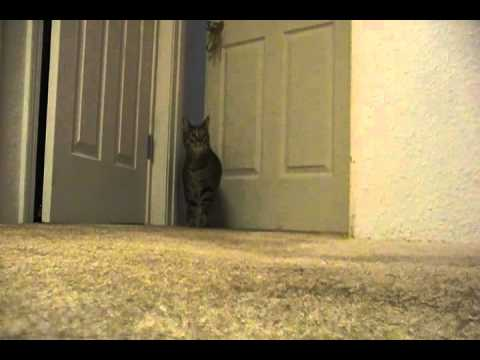 Cat nails audition