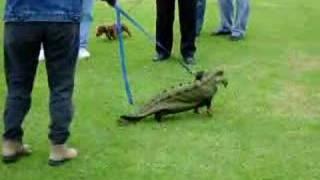 Dachshund In An Alligator Costume
