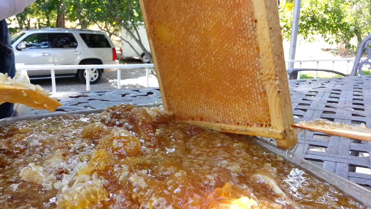 Gather Your Honey Harvesting Equipment