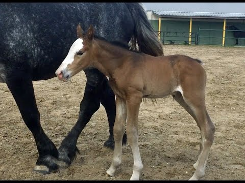 This cute baby horse will be a NOPD police horse