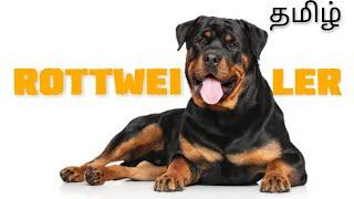 Rottweiler dog breed | details | Tamil