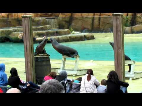 Sea Lion Show @ Blackpool Zoo
