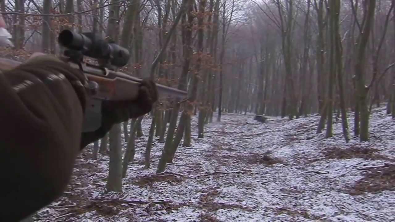Boar Hunting Germany