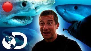 🔴Episodios completos sobre tiburones (sin interrupciones) | Shark Week | Discovery Latinoamérica