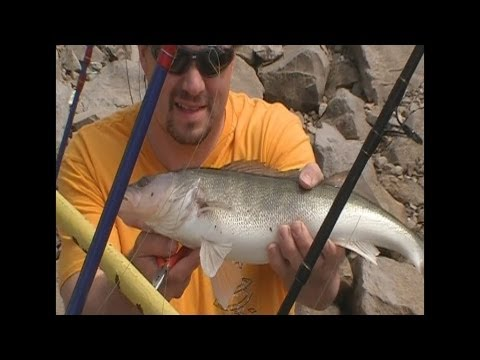 Walleye fishing video at the Ohio river at the Hannibal lock and Dam in New Martinsville