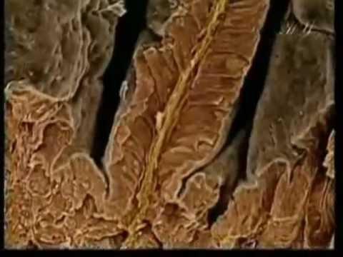 Скелет человека: объясняем детям кости скелета