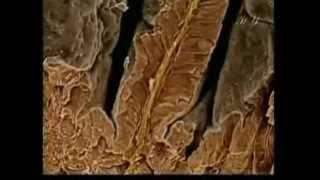 Чудо пищеварительной системы человека