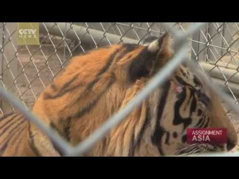 Assignment Asia Episode 39: Nature and Wildlife