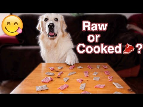 Raw or Cooked Meat? What will the Dog choose?