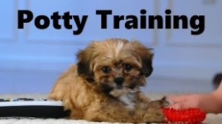 How To Potty Train A Shih Poo Puppy - Shih-Poo House Training Tips - Housebreaking Shih Poo Puppies