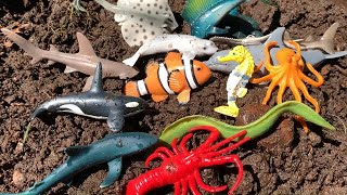 Cleaning Dirty Muddy Marine Animal Toys