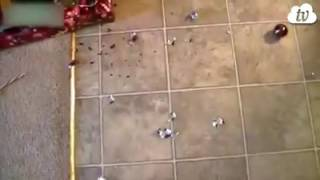 Коты мстители РОЖДЕСТВА!!!!