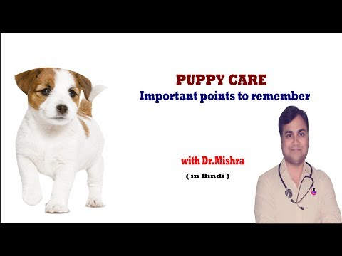 PUPPY CARE TIPS II Explained II dog and vet II Hindi