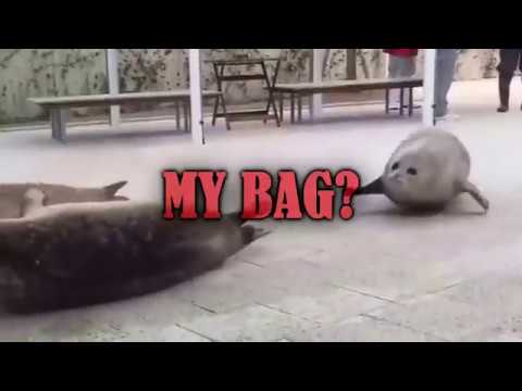 DID YOU SEAL MY BAG?