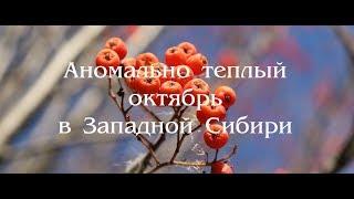 Аномально теплый октябрь в Западной Сибири