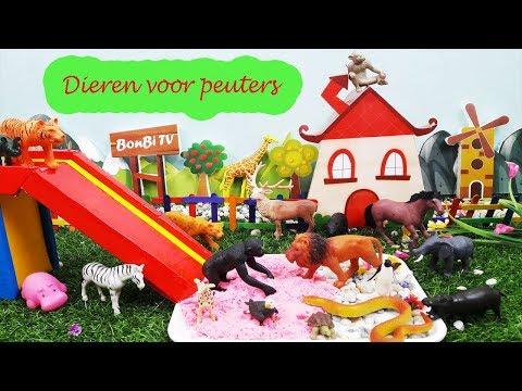 Speelgoed wilde dieren in nederland met kleur klei en spellen slides